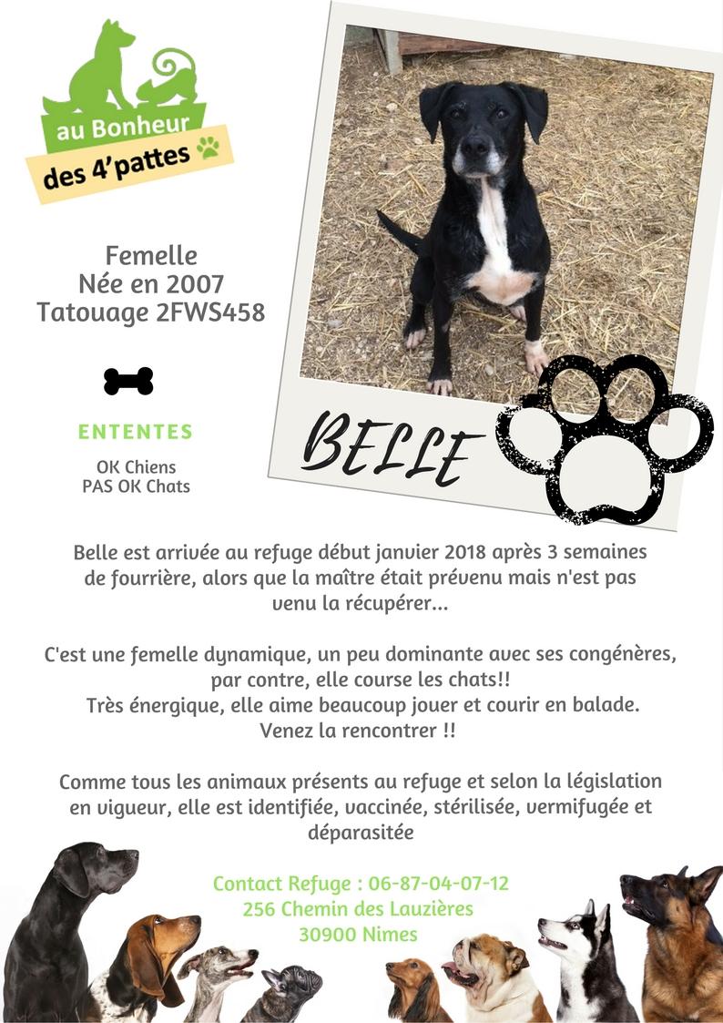 BELLE -    12 ans - Refuge au bonheur des 4 Pattes à Nimes (30) BELLE-1