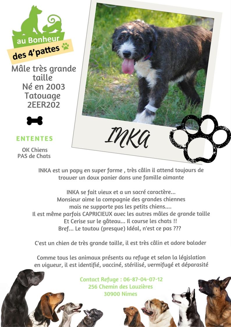 INCA/INKA - x griffon 16 ans -  (4 ans de refuge)  Refuge au bonheur des 4 Pattes à Nimes (30) INKA