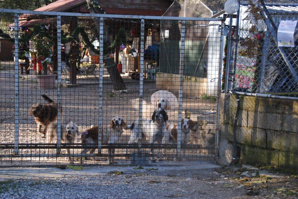 chiens à l'adoption