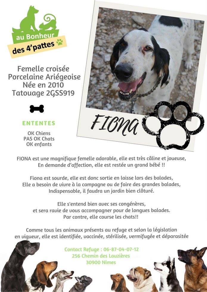 Fiona à l'adoption,  vous attend avec impatience au refuge