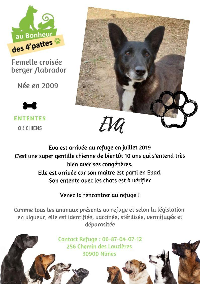 EVAa - x labrador 12 ans - Refuge au Bonheur des 4 Pattes à Nimes (30) 1_EVA