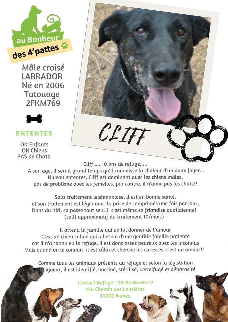 CLIFF  -  x Labrador/berger noir 14 ans (13 ans de refuge) -  AU BONHEUR DES 4 PATTES A  NIMES  (30) CLIFF