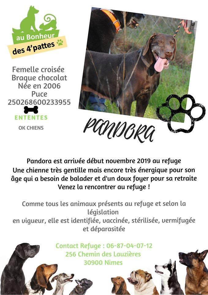 PANDORA - x braque 15 ans - Refuge Au Bonheur des 4 Pattes à Nimes (30) PANDORA
