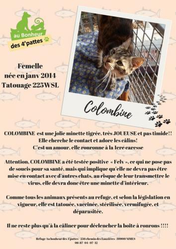 COLOMBINE-1