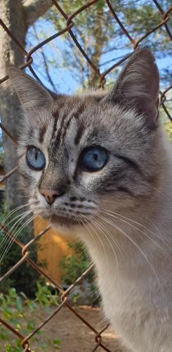 Beaux yeux bleus
