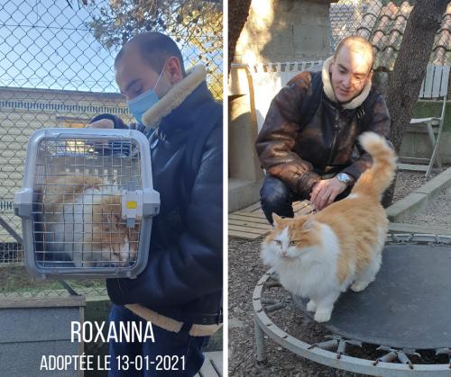 ROXANNA adoptée 13-01-21